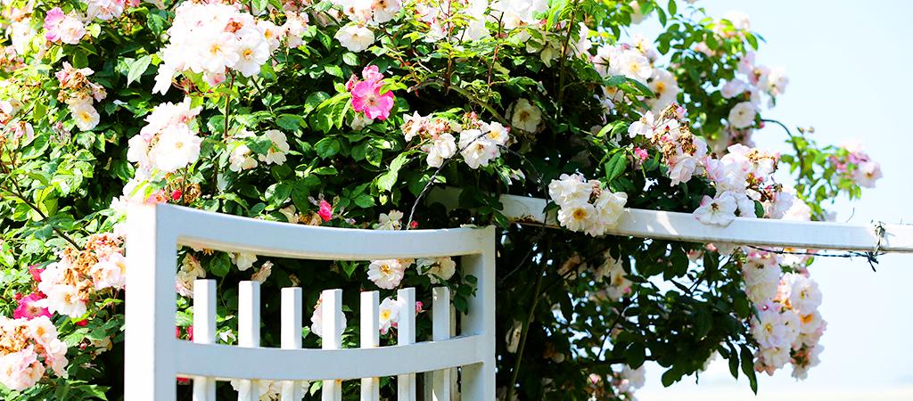 rosengrind